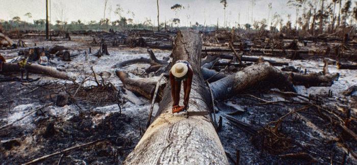 Comprendere le ragioni della pandemia da Covid-19: Distruzione ecologica